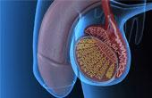 Нарушения развития детородных органов ребенка
