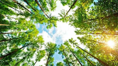 Деревья: красота, польза, здоровье