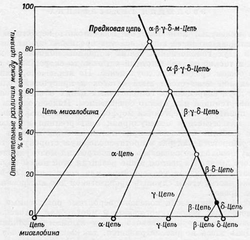 Родственные взаимоотношения известных цепей гемоглобина и миоглобина человека