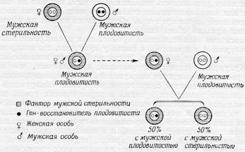 Контроль внехромосомных ген