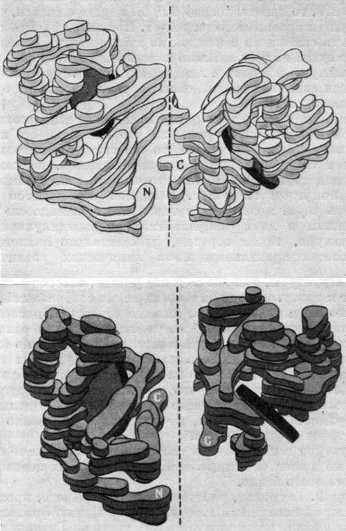 Подавление α-спиралей