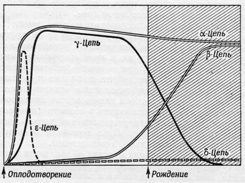 Представление о происхождении от общего предка α- и β-цепей