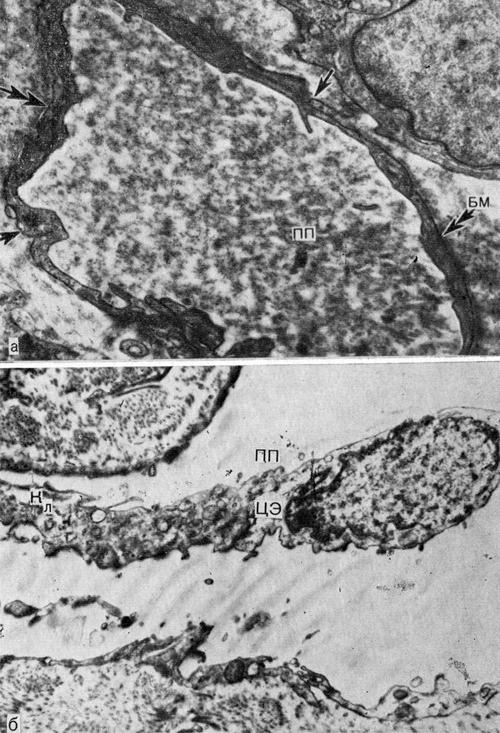 Появление клапанов в лимфатических посткапиллярах