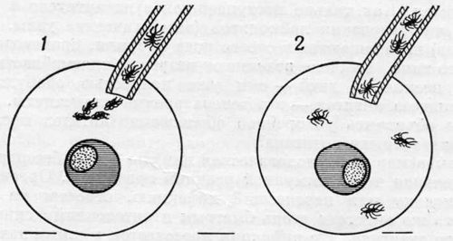 Действие антител