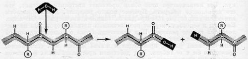 Гидролиз белковой молекулы сводится к разрыву пептидной связи