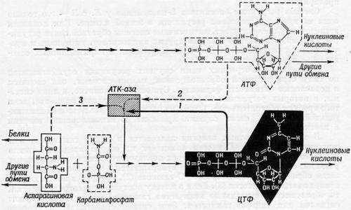 Синтез нуклеиновой кислоты