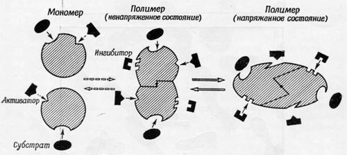 Модель для механизма регуляции ферментов