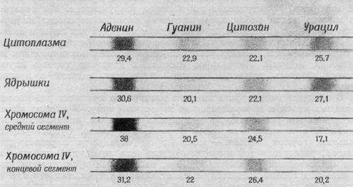 Введение меченой аминокислоты подопытной личинке