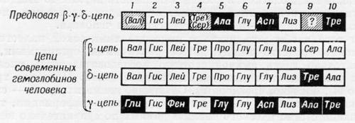 Аминокислотная последовательность предковой полипептидной цепи