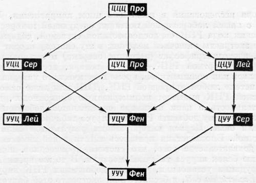 Связь между некоторыми сочетаниями нуклеотидов