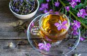 Иван-чай полезные свойства и противопоказания