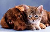 Полезно ли держать животное в доме?