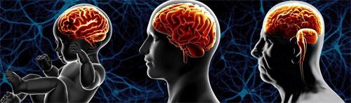 Что происходит с мозгом при старении?